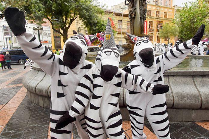 cebras de La Paz