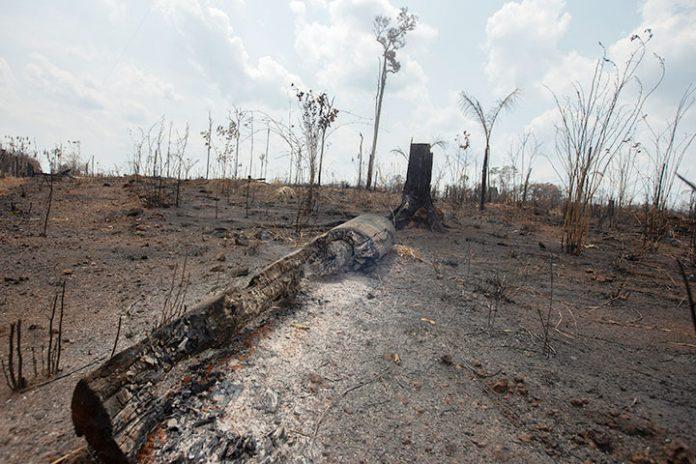 incendios Amazonía 1