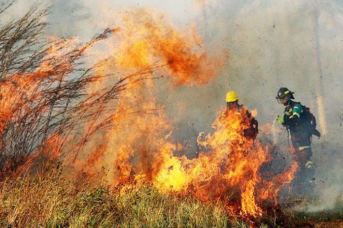incendios Santa Cruz