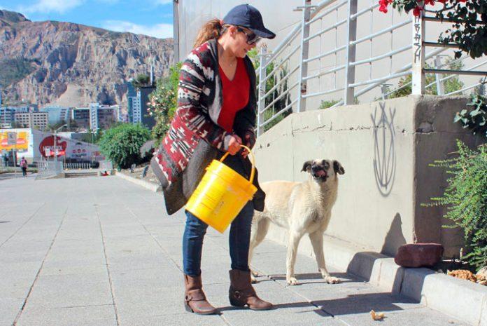 voluntaria alimenta a un perro callejero