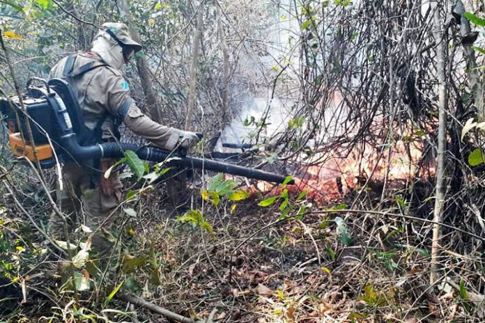 incendios Pantanal brasileño