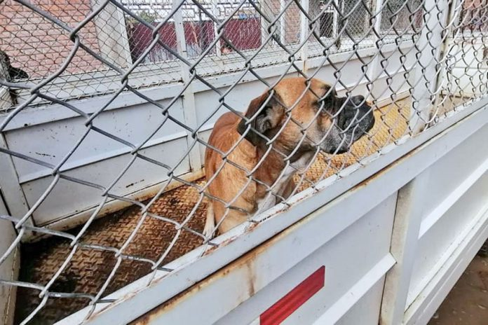 captura perros Cochabamba