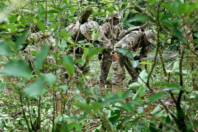 erradicación cultivos hojas de coca