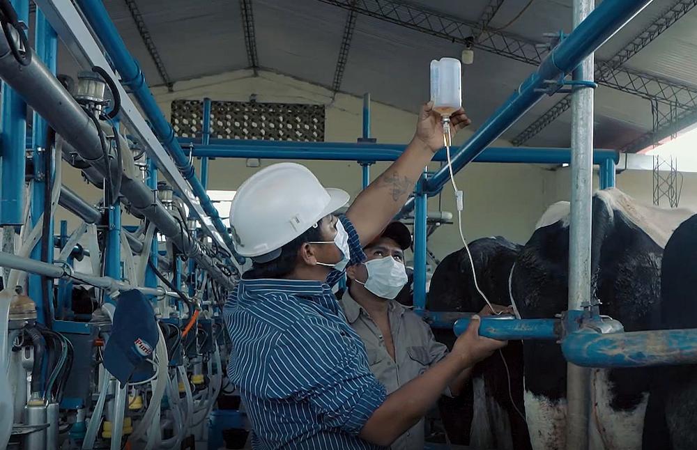 produccion de 70 litros de leche por dia