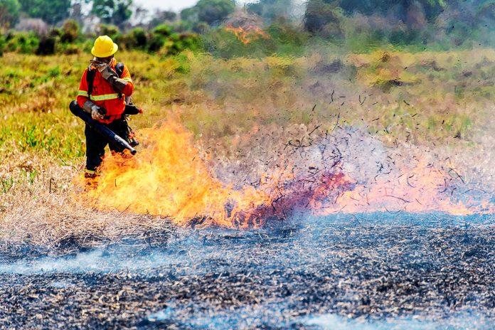 incendios forestales vuelven a amenazar al Pantanal