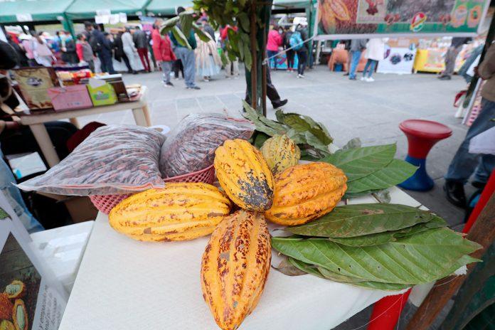 productos de la Amazonía boliviana